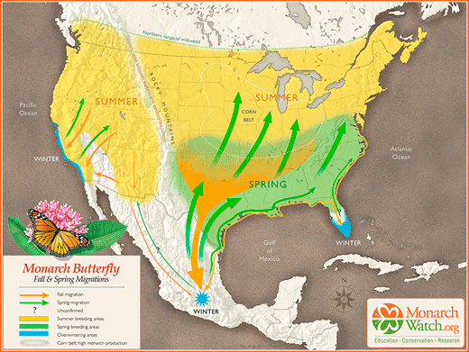 Monarch Watch Migration Map