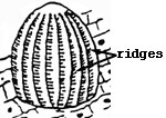 Diagram of Monarch egg