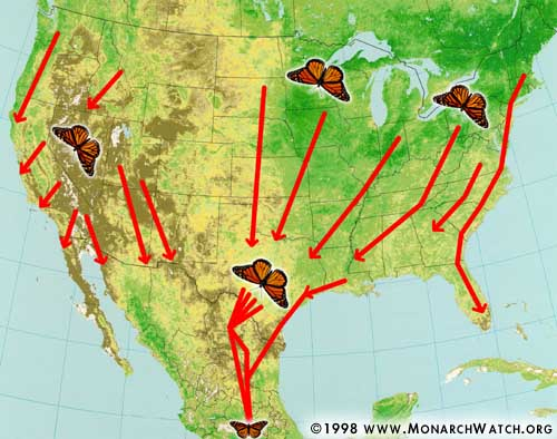 Monarch migration paths - from Monarch Watch