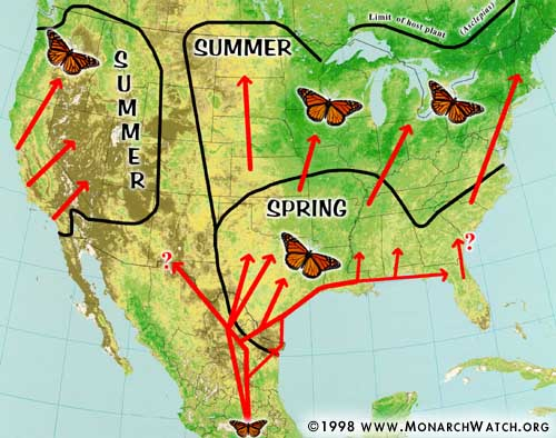 Monarch Spring migration path